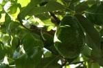 avocado-1313798